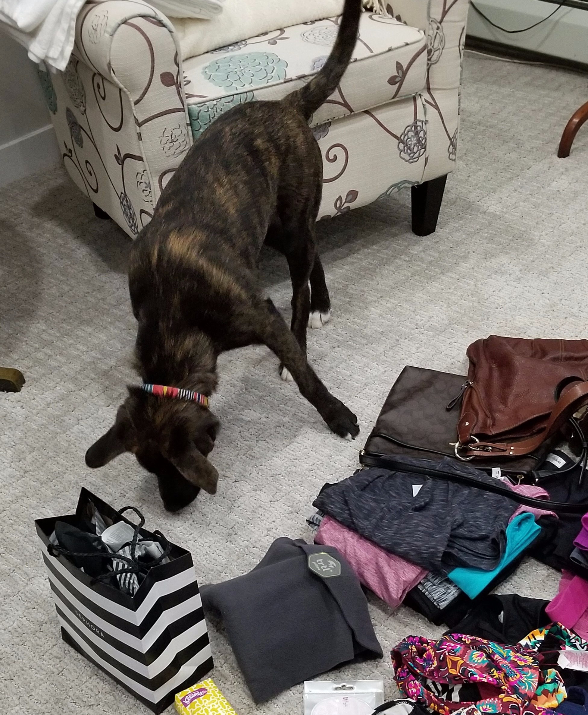 Zanna Helps Pack