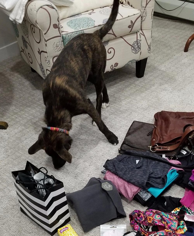 Zanna Helps Pack