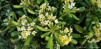 Fresh jasmine everywhere!